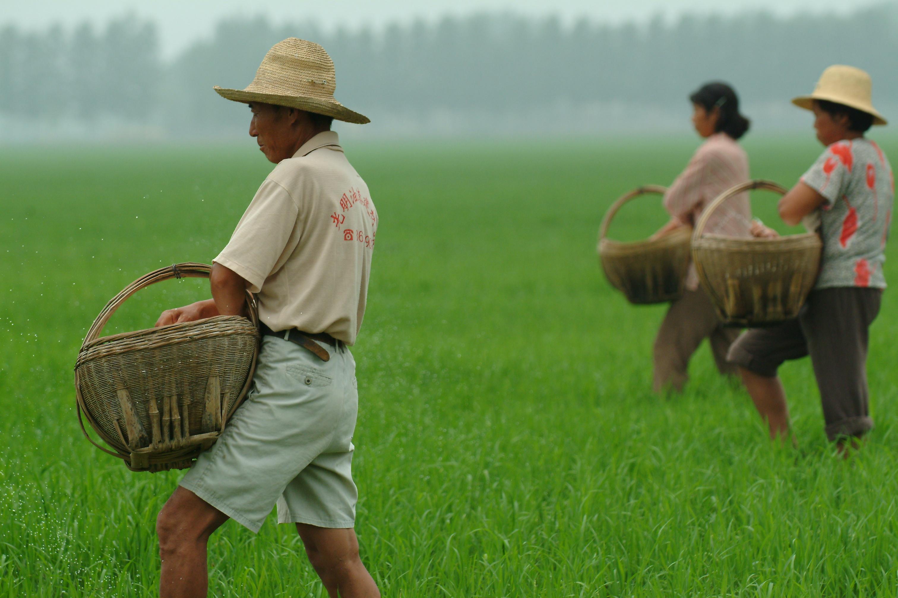 Китайские крестьяне фото